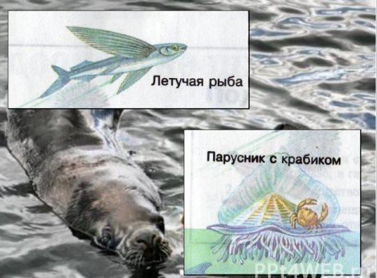 жизнь в морях и океанах тест